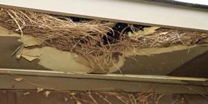 Rodent Damage Repair