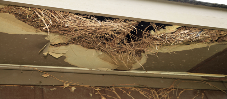 Rodent Damage Service Porttland
