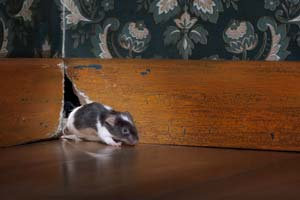 Rodent Damage Repair Portland OR