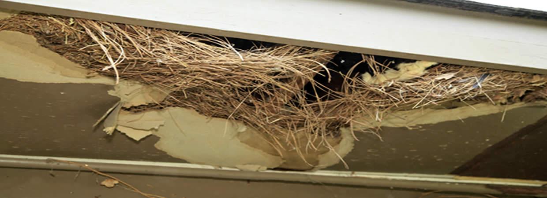 Rodent Damage Repair Portland