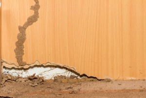 Crawl Space Cleanup McMinnville